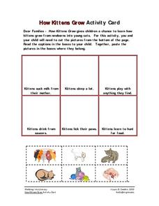 How Kittens Grow Activity Card Worksheet