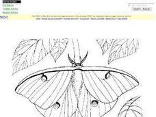 Swallowtail Butterfly Coloring Worksheet