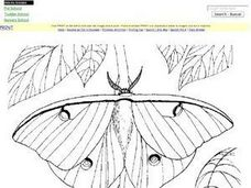 Luna Moth Worksheet