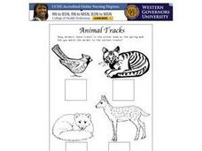 Animal Tracks Matching Worksheet Worksheet