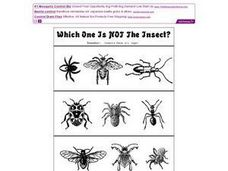 Which One is not the Insect Worksheet