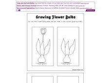 Growing Flower Bulbs Worksheet