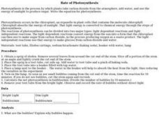 Rate of Photosynthesis Lesson Plan