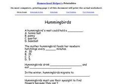 Hummingbirds Worksheet