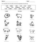 Names of Animals Worksheet