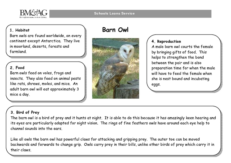 Barn Owl Handouts & Reference for 2nd - 3rd Grade | Lesson ...