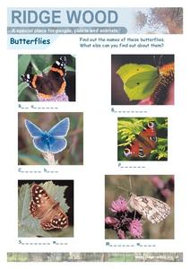 Butterfly Identification and Naming- Fill in the Blanks Worksheet