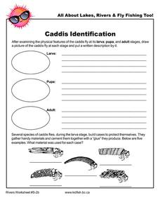 Caddis Identification Worksheet