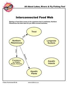 Interconnected Food Web Worksheet