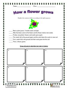 How a Flower Grows Lesson Plan