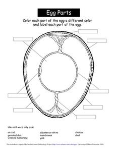 Egg Parts Worksheet