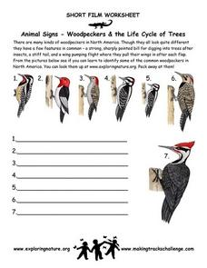 Animal Signs--Woodpeckers & the Life Cycle of Trees Worksheet