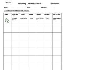 Recording Common Grasses Worksheet
