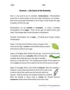 Science - Life Cycle of the Butterfly Worksheet