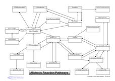 Aliphatic Reaction Pathways Graphic Organizer