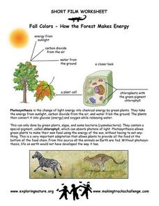 Fall Colors-  How the Forest Makes Energy Worksheet