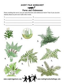 Ferns and Clubmosses Worksheet