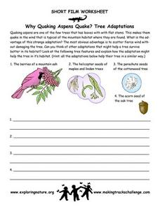Why Quaking Aspens Quake?  Tree Adaptations Worksheet