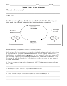 Cellular Energy Review Worksheet