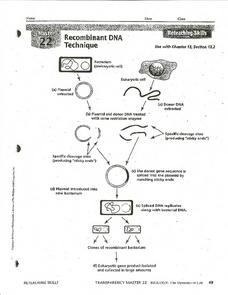 Dna technology worksheet answers key