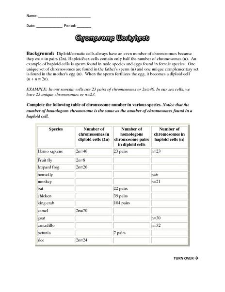 Chromosome Worksheet Graphic Organizer for 9th   Higher Ed ...