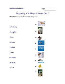 Beginning Matching - Animals Part 2 Worksheet