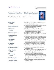 Advanced Matching - The Organ Systems Worksheet