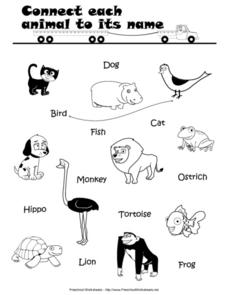 Connect Each Animal to its Name Lesson Plan