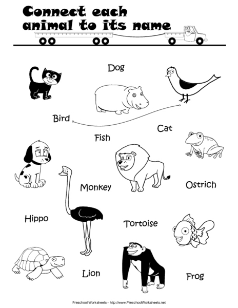 Connect Each Animal to its Name Lesson Plan for