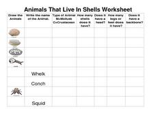 Animals That Live in Shells Worksheet