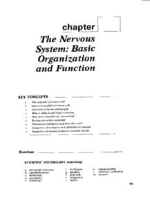 The Nervous System: Basic Organization and Function Worksheet