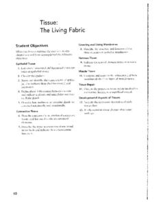 Tissue: The Living Fabric Worksheet