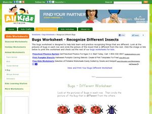 Bugs Worksheet- Recognize Different Insects Worksheet