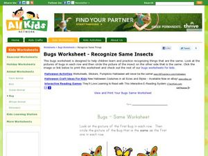 Bugs Worksheet- Recognize Same Insects Worksheet