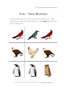 Birds - Same Worksheet Worksheet