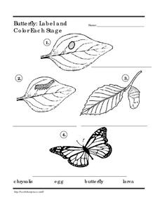 Butterfly Life Cycle 3 Worksheet