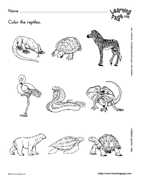 Classifying Reptiles and Amphibians Worksheet for