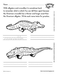 Distinguish Alligators from Crocodiles Worksheet