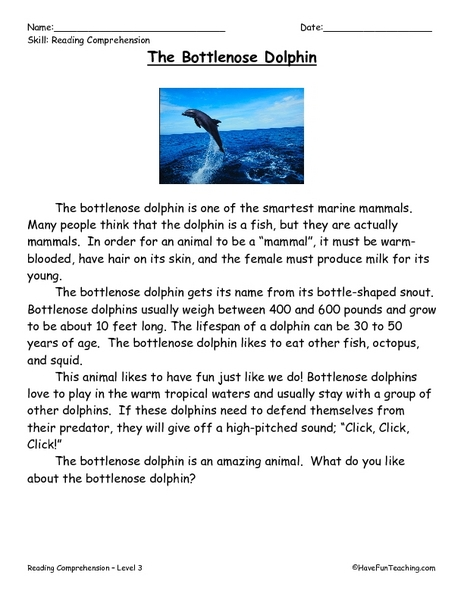 The Bottlenose Dolphin: Reading Comprehension 2nd - 4th Grade ...