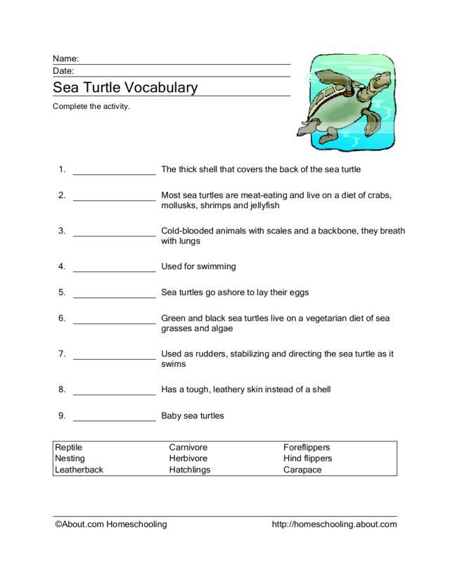 Sea Turtle Outline #7460