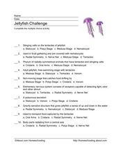 Jellyfish Challenge Worksheet