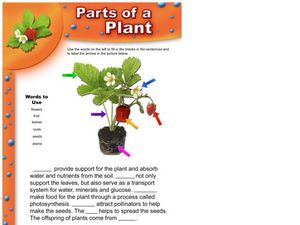 Parts of a Plant - Strawberry Plant Worksheet