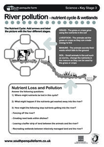 River Pollution - Nutrient Cycle & Wetlands Worksheet