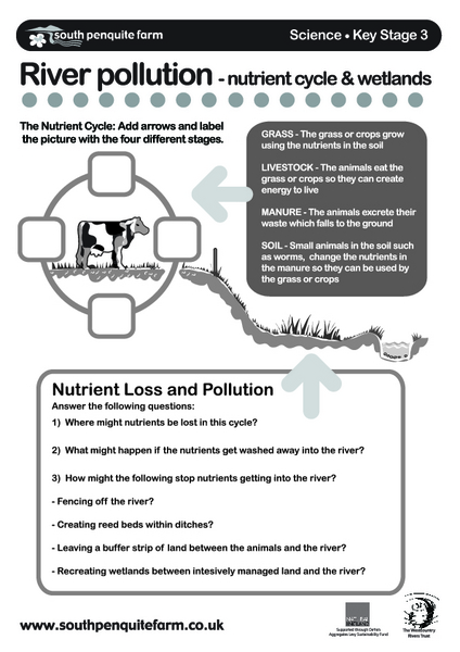 River Pollution Nutrient Cycle Wetlands Worksheet For