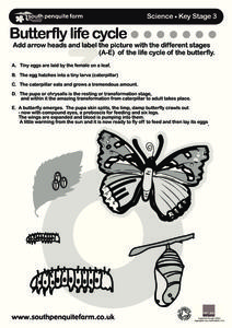 Butterfly Life Cycle... Worksheet