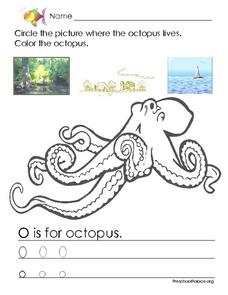 Where the Octopus Lives Lesson Plan