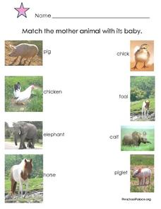 Matching Practice: Mother Animals and Babies Lesson Plan
