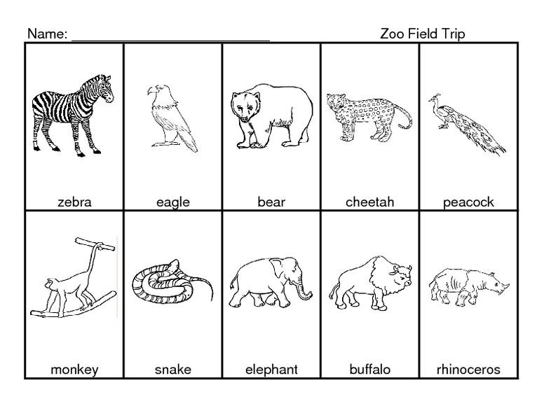 Zoo Field Trip Worksheet andrewgarfieldsource – Zoo Worksheets
