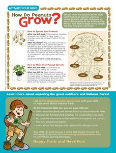 How Do Peanuts Grow? Worksheet