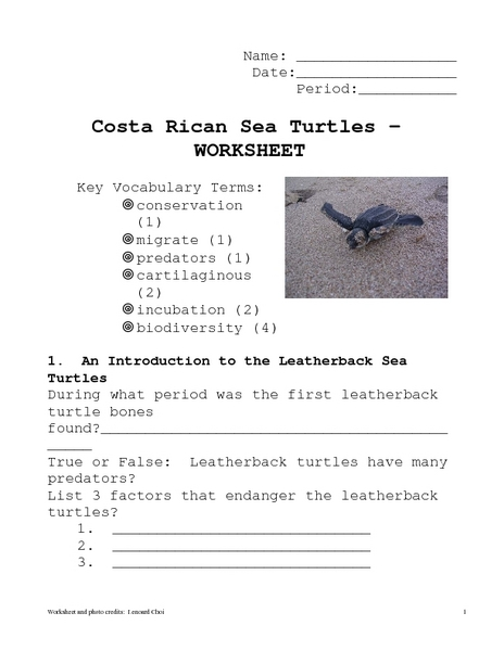 Costa Rican Sea Turtles Worksheet Worksheet for 6th - 7th ...